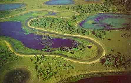 imagem foto pantanal
